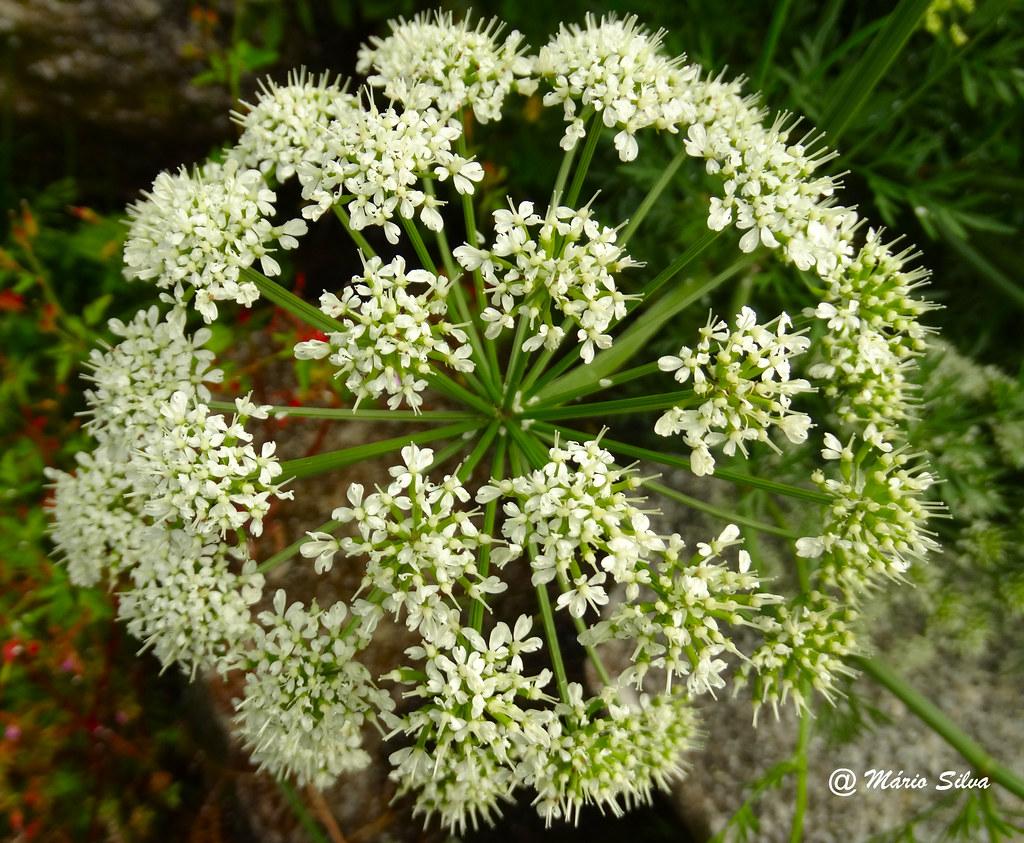Águas Frias (Chaves) - ... girandola de flores  ....