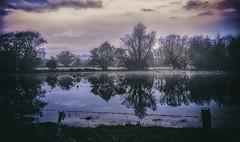 Waveney Reflections