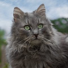 Fynnie is waiting (FocusPocus Photography) Tags: fynn fynnegan katze kater cat chat gato tier animal haustier pet