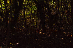 20160703-DS7_8482.jpg (d3_plus) Tags: street sea sky fish plant flower nature japan port drive nikon scenery underwater diving snorkeling telephoto bloom  tele watersports nikkor   marinesports shizuoka   touring  apnea izu    80200mm 80200     fishingport skindiving   8020028 80200mmf28d minamiizu  80200mmf28      80200mmf28af   nikon1 d700 nikond700   aiafzoomnikkor80200mmf28sed