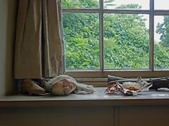 Andrew Wyeth Studio_04 (AbbyB.) Tags: studio wyeth pennslyvania andrewwyeth