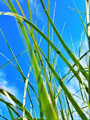 Showcase July Grass Photography Taking Photos Check This Out Relaxing Enjoying Life Samsung Galaxy S6 Green Color Blue Color Nature_collection Sunny Day Sky And Clouds Massachussets Color Photography Eyeemphotography Hanging Out Taking Photos Nature Photo (alexandrealmeida6) Tags: showcasejuly grassphotography takingphotos checkthisout relaxing enjoyinglife samsunggalaxys6 greencolor bluecolor naturecollection sunnyday skyandclouds massachussets colorphotography eyeemphotography hangingout naturephotography natureperfection naturetextures fineartphotography awesomeperformance