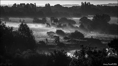 Stoke Park mist (zolaczakl ( 2 million views, thanks everyone)) Tags: bristol bristolinmonochrome blackandwhitebristol blackandwhite mono monochrome stokepark mist earlymorninglight earlymorning duchesspond countryside trees landscape august 2016 photographybyjeremyfennell nikond7100 nikonafsnikkor24120mmf4gedvrlens