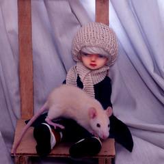 Unstoppable Cute! (Blue Kitsune) Tags: baby rat noel fancy bjd abjd pipos piposdoll