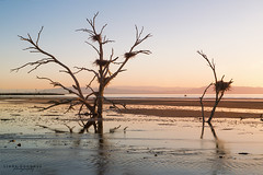 Salton Sea Sunset (Linda Goodhue) Tags: saltonsea sea southerncalifornia california water mountains sunset settingsun colour landscape nature travel desert beach shore shoreline lindagoodhuephotography nikond800 sundown deadtree deadtreeinwater