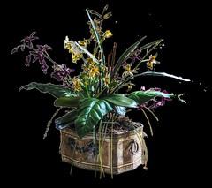 houseplant 02 (Hardgrave Photography) Tags: houseplant plant stockimage planter pot