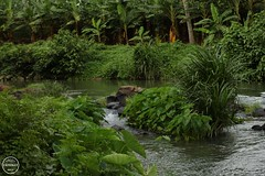 IMG_0243_marked (Dr.Yeskey's Photography) Tags: water landscape nature river stream greenery beuty