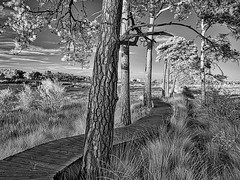 219 2016-366 The boardwalk (graber.shirley) Tags: infrared