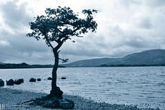 Loch Lomond 014 (louisehay) Tags: loch lochlomond scotland milarrochy hills