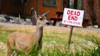 Dead End & Deer