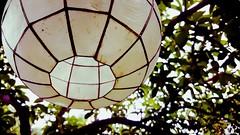 Capiz Lamp (LAKAN346) Tags: philippines manila cebu islandsofadventure paradise people animals vacation sun fun sea nature culture filipino visaya exotic tagalog salamat beach boats trip water hot discover halfwayaroundtheworld lapulapu