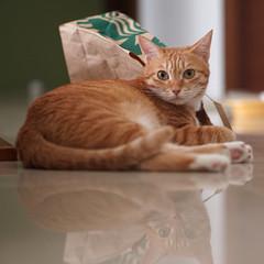 DSC09785S (lazybonessss) Tags: cat sonya7 sonyilce7 leica elmaritm90 momo kitten2