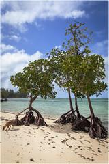 The beach .. (:: Blende 22 ::) Tags: canoneos5dmarkii ef2470f28liiusm fishing color colorful mauritius maskarenen riviredurempart district northernedgeofmauritius grand baiecanoneos5dmarkii anselaraie trees beach bucht baum wolken clouds