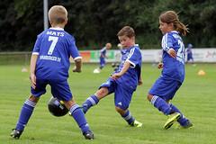 Feriencamp Pln 30.08.16 - c (3) (HSV-Fuballschule) Tags: hsv fussballschule feriencamp pln vom 2908 bis 02092016