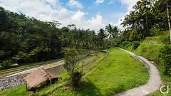Rizires prs du Gunung Kawi (JCPhotographie) Tags: gunung kawi rock temple rice terasse bali indonesia nature