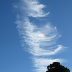 sundog overhead (mimbrava) Tags: marestailclouds sundog clouds sky arr allrightsreserved mimeisenberg mimbrava mimbravastudio