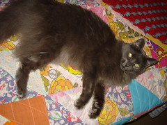 Cat on Quilt I (DaisyDeadhead) Tags: cats felines quilts caturday
