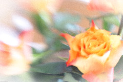 Lensbaby rose... (judy dean) Tags: orange rose lensbaby grain composer 2015 judydean sonya6000