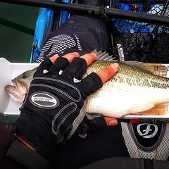 Hooked up! #jc1scastaway #kayakfishing #kayakbassleague #KBL #bassfishing #feelfree #feelfreelure115 #KaruLureVibraShock #hookedup #