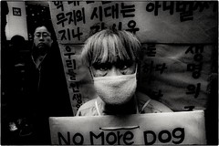 ((Jt)) Tags: blackandwhite dog asia streetphotography korea seoul compactcamera myeongdong 24hourproject ricohgrd3 ricohgrdiii jtinseoul