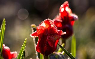 Frühling - Farben satt !!!