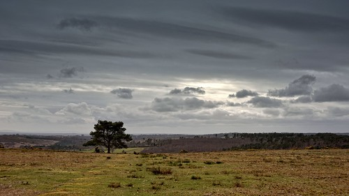 Ashdown Forest View by tsbl2000, on Flickr