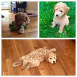 Banjo in his new home!  He is one of Lucy Jo and Chewy's little boys!