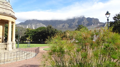"Papyrus and Table Mountain in Cloud (""Tablecloth""), Company's Garden, Cape Town, South Africa (dannymfoster) Tags: africa southafrica capetown papyrus tablemountain companysgarden"