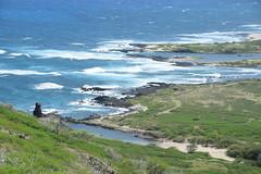 30-May 22 2016-Oahu HI-Makapu'u Summit (Barb Mayer) Tags: coastline ocean pacificocean makapuu hawaii oahu