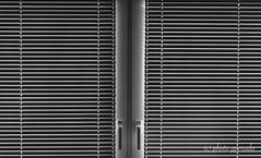 B&W Impressions - Light Stripes (gporada) Tags: fotodioxpro fotodiox gporada a7ii sonya7ii ilce7m2 oss inbodyimagestabilization bildstabilisierung canon canonef50 ef5018ii canonef50mm118ii bw einfarbig schwarzweis blackwhite manualmode niftyfifty sony blackwhitephotos noautofocus welltaken phvalue world100f
