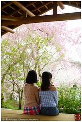 Spring in Haradani-en garden, Kyoto, Japan (Damien Douxchamps) Tags: girls west japan spring women kyoto tatami  western  cherryblossom  sakura kansai japon hanami  ukyo kinki  flowerpark  ukyou haradanien