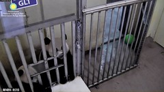 2016_08-14c (gkoo19681) Tags: beibei meixiang curious patientlywaiting hopeful begging ccncby nationalzoo