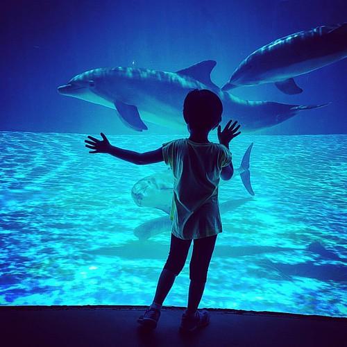 La felicità di poterli quasi toccare ... la loro capacità di far felici i bambini ... #alexandra #dolphin #erressephoto #oltremare #riccione #spettacolo #natura #delfini #vacanze