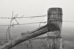 crossed wires, hff! (holly hop) Tags: fog foggy farm emu fences fencefriday fencepost mist winter grey wet hff barbedwire wire wood