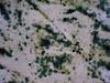 BLUE6585 (David J. Thomas) Tags: arkansas microbiology batesville anabaena cyanobacteria terraforming lyoncollege ecopoeisis planetaryengineering techshot davidjthomas marssimulator