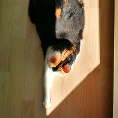 zonnewijzer (milov) Tags: light cats sun sunlight home animals phonecam square paw shiny cropped motox tweetme fbme poek instagram