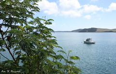 Houhora (K. Haagestad) Tags: bay boat nz greenery northland houhora
