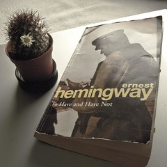Hemingway (✿ Triin Q) Tags: reading book books literature currentlyreading nowreading bookphotography triinbooks