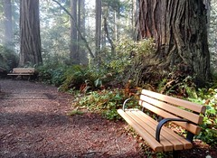 California Redwoods (LarrynJill) Tags: california ca trip travel nature spring roadtrip april redwoods recreation 2015