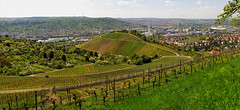 Vineyard in Spring - Stuttgart (Germany) (Batikart) Tags: road city blue trees houses sky urban panorama plants mountains green nature grass lines clouds rural canon buildings germany landscape geotagged deutschland spring flora europa europe pattern stitch stuttgart path strasse hill natur himmel wolken haus vine sunny line berge vineyards stadt april fields gras grün agriculture curve ursula sonnig landschaft sonne bäume muster grapevine weg frühling sander kurve g11 rotenberg weinstock badenwürttemberg frühjahr 2015 weinberge 100faves 200faves 300faves 400faves batikart mercedesbenzarena canonpowershotg11