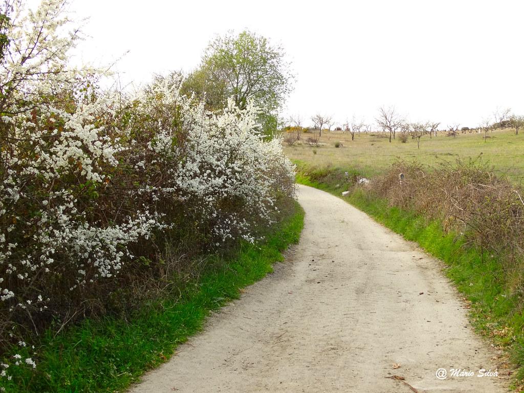 Águas Frias (Chaves) - ... caminho florido ...