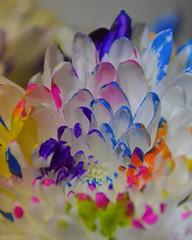 painted petals (armykat) Tags: flowers macro petals paintedflowers