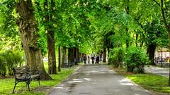 Walk the promenade along the flowering and fragrant conker tree (malioli) Tags: park city urban tree canon town europe place croatia promenade conker cro hrvatska karlovac conkertree