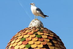 A Bird On The Roof (Alan1954) Tags: holiday bird colours monaco colourful 2015