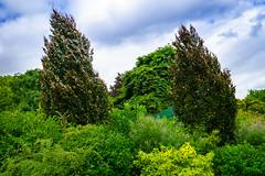 Parc Monceau, Paris - Fagus sylvatica Purpurea (wiandt.gabor) Tags: paris parc fagus kert sylvatica purpurea kertek vrbkk monceauparc
