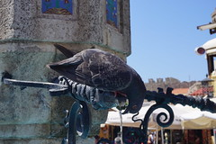 Thirsty Pigeon of Rhodes (alar TRKMEN) Tags: fountain pigeon sony greece rodos rhodes thirsty gvercin yunanistan eme susam a6000 ilce6000