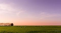 DSC_8125_Lr-edit (Alex-de-Haas) Tags: b sunset sun lake holland water netherlands beautiful dutch landscape zonsondergang meer flat dusk nederland thenetherlands meadow mooi grassland peninsula polder nederlands zon marken ijsselmeer weiland plat landschap noordholland schemering vlak boerenland schiereiland