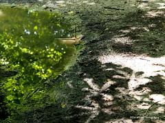 Kastanienbaum (Serafinas Photographs) Tags: wasser natur landschaft sonne regen pftze spiegelungen lichtundschatten kastanienbaum