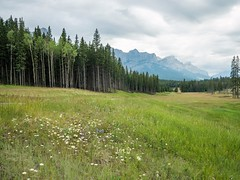 Mount Rundle (GeoKs) Tags: rain wildflowers canmore mountrundle