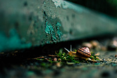 317/365 The Journey is the destination (ewitsoe) Tags: street city summer urban storm hot animal 35mm warm europe critter shell snail poland summertime slug 365 snails wlodawa nikond80 ewitsoe eastpoalnd